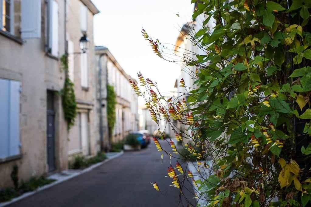 Rue numa ducros la rue jardin trouillot hermel for Jardin 122 rue des poissonniers